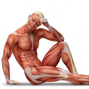 Na ktorej časti tela máme sval biceps femoris?