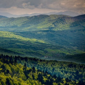 Koľko percent slovenského územia tvoria lesy?