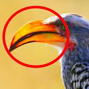 Táto časť tela vtákov sa po anglicky povie