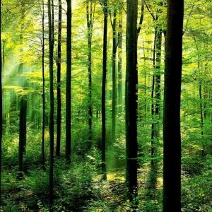 Koľko percent Slovenska tvoria lesy? V Strednej Európe sme v poradí druhá krajina po Rakúsku!