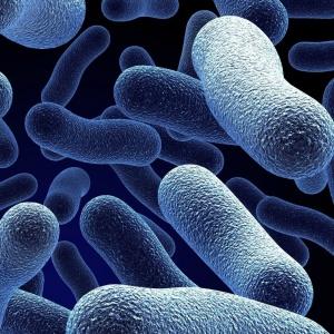 V ľudskom tele sú niektoré vitamíny tvorené baktériami