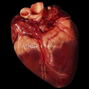 Činnosť srdca je riadená nervami
