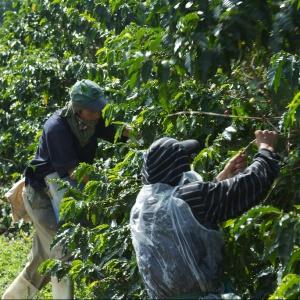 Ktorá krajina je najväčším svetovým výrobcom kávy?